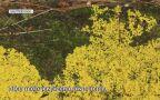 Niezwykłe umiejętności śluzowca Physarum polycephalum